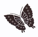 手捺染木綿「縁起紋づくし柄パターン/蝶」